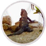 Iguana Watchout Round Beach Towel