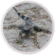 Iguana With A Striped Tail On A Sand Beach Round Beach Towel
