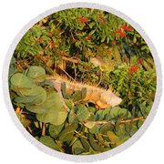 Iguanas Round Beach Towel