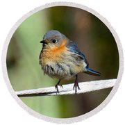 Illusive Female Bluebird Round Beach Towel