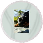 I'm Bored Rottie Round Beach Towel