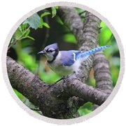 I'm Looking - Blue Jay Round Beach Towel