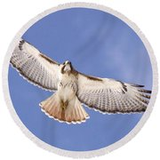 Img-0001 - Red-tailed Hawk Round Beach Towel