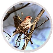 Img_0001 - House Finch Round Beach Towel