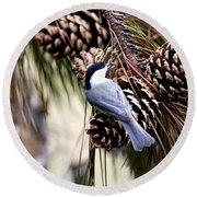 Img_0215-022 - Carolina Chickadee Round Beach Towel