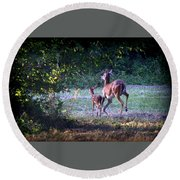 Img_0461-020 - White-tail Deer Round Beach Towel