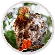 Img_1050-002 - Red-tailed Hawk Round Beach Towel