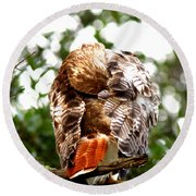 Img_1049-006 - Red-tailed Hawk Round Beach Towel