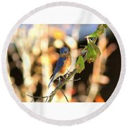 Img_145-005 - Eastern Bluebird Round Beach Towel