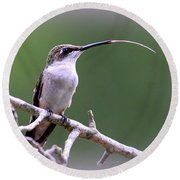 Img_1768-001 - Ruby-throated Hummingbird Round Beach Towel