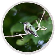 Img_3309 - Ruby-throated Hummingbird Round Beach Towel