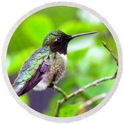 Img_3524-002 - Ruby-throated Hummingbird Round Beach Towel