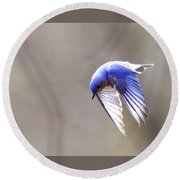Img_4138-003 - Eastern Bluebird Round Beach Towel