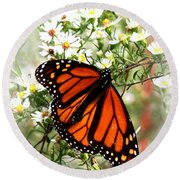 Img_5284-001 - Butterfly Round Beach Towel