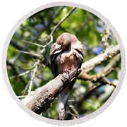 Img_7276 - Mourning  Dove Round Beach Towel
