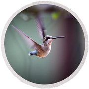 Img_8532 - Ruby-throated Hummingbird Round Beach Towel