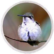 Img_8835 - Ruby-throated Hummingbird Round Beach Towel