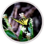 Img_8960 - Tiger Swallowtail Butterfly Round Beach Towel