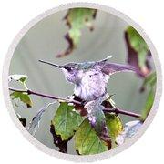 Img_9114-003 - Ruby-throated Hummingbird Round Beach Towel
