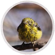 Img_9853 - Pine Warbler -  Very Wet Round Beach Towel