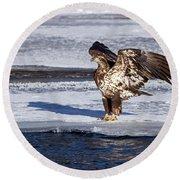 Immature Eagle On Ice Round Beach Towel