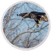 Immature Eagle Wheels Down Round Beach Towel