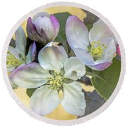 In Apple Blossom Time Round Beach Towel