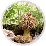 In Hiding - Morel Mushroom Round Beach Towel