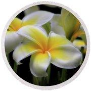 In Love With Butterflies Plumeria Flower Cecil B Day Butterfly Center Art Round Beach Towel