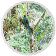 In The Moss Round Beach Towel
