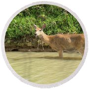 In The River Round Beach Towel
