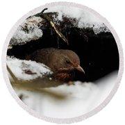 In The Shelder. Eurasian Blackbird Round Beach Towel