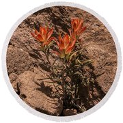 Indian Paintbrush At Bandelier Round Beach Towel
