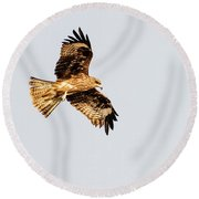 Indian Spotted Eagle Round Beach Towel