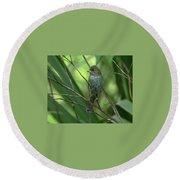 Indigo Bunting - Felts Nature Preserve - Ellenton Florida Round Beach Towel