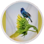 Indigo Bunting Sunflower Round Beach Towel