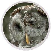 Injured Owl Round Beach Towel