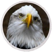 Inquisitive Eagle Round Beach Towel