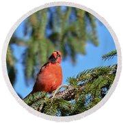 Inquisitive Male Cardinal Round Beach Towel