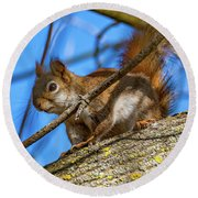 Inquisitive Squirrel Round Beach Towel