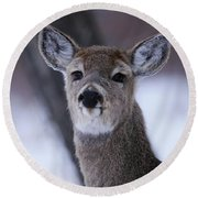 Inquisitive Yearling Round Beach Towel