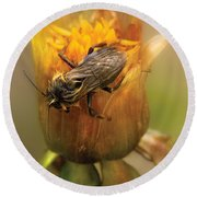 Insect - Bee - Dare To Bee Different Round Beach Towel