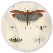 Insects, Plate IIi Round Beach Towel by Antoine Sonrel