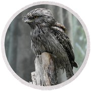 Interesting Tawny Frogmouth Perched On A Tree Stump Round Beach Towel