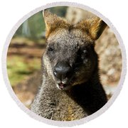 Interview With A Swamp Wallaby Round Beach Towel
