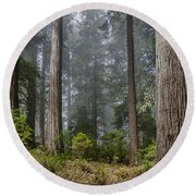 Into The Redwood Forest Round Beach Towel