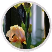 Iris Along The Fence 6731 H_2 Round Beach Towel