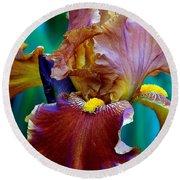 Iris Beauty Photograph Round Beach Towel