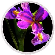 Iris Bloom Two Round Beach Towel