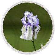 Iris Buds To Flower Round Beach Towel
